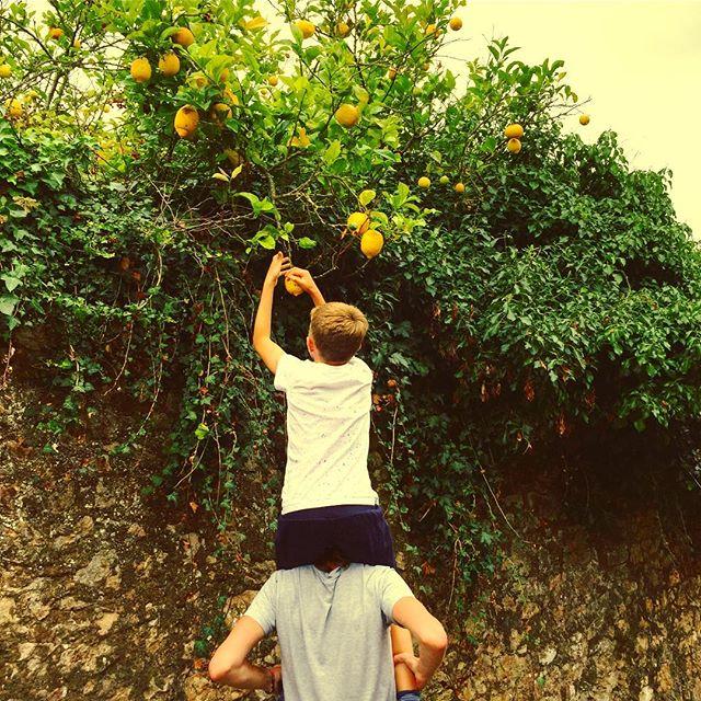 Lemon scrumping